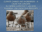 climate change and shorebirds